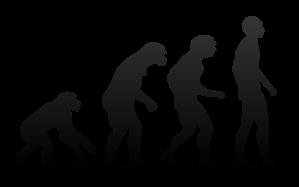 800px-human_evolution-svg
